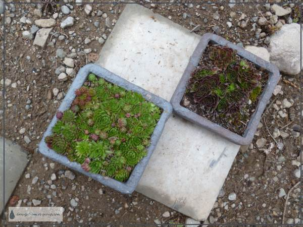 Styrofoam planters made from coolers