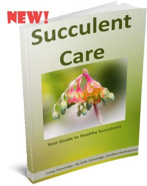 Succulent Care E-Book