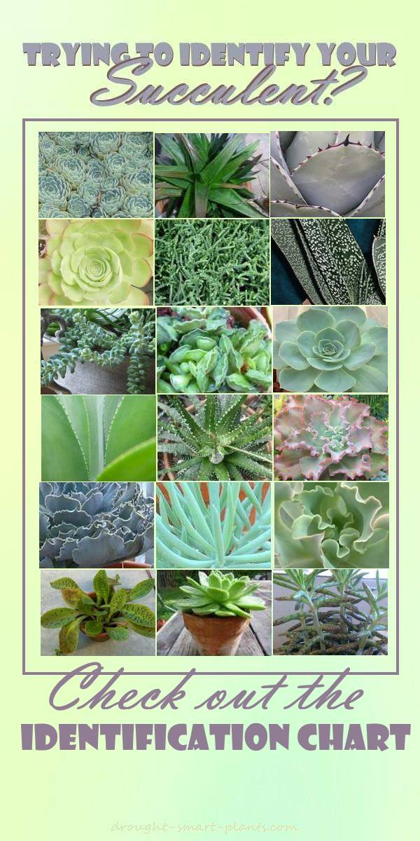 the ultimate succulent identification chart - House Plant Identification Guide By Picture