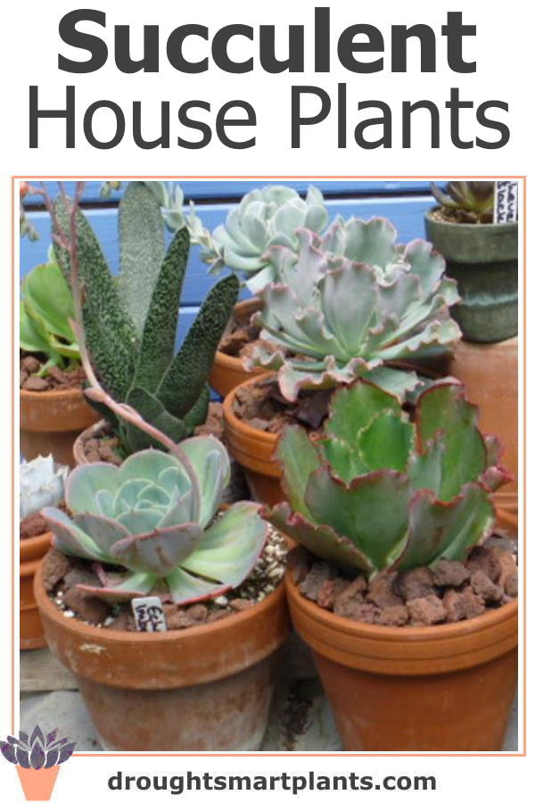 Expand your selection of houseplants with succulents