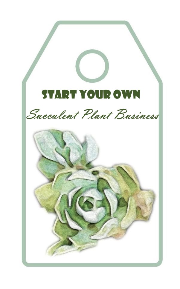 Start Your Own Succulent Plant Business