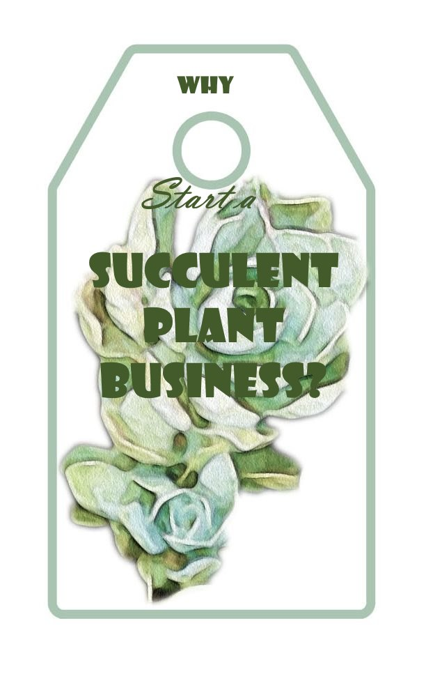 Why Start a Succulent Plant Business?
