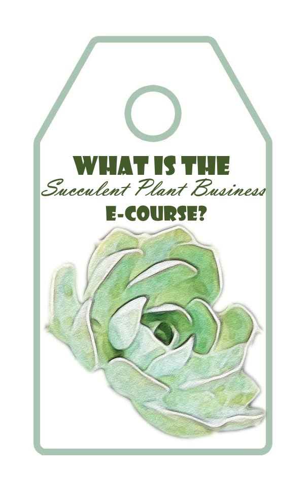 What is the Succulent Plant Business E-Course?