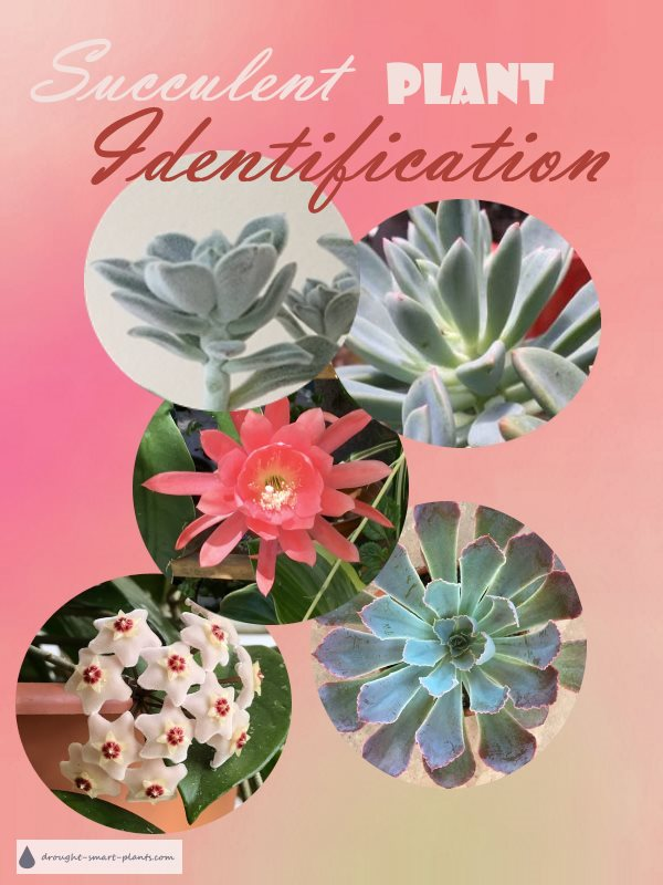 Succulent Plant Identification - find your succulent here...