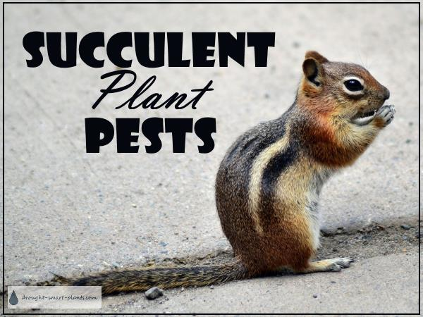 Succulent Plant Pests