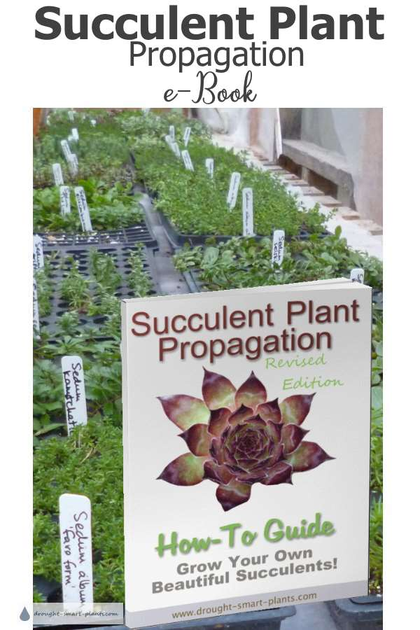 Succulent Plant Propagation E-Book - learn how to root succulents like a pro!