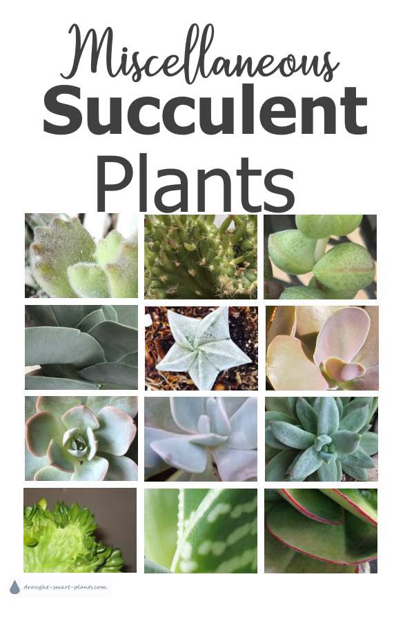 Miscellaneous Succulents...
