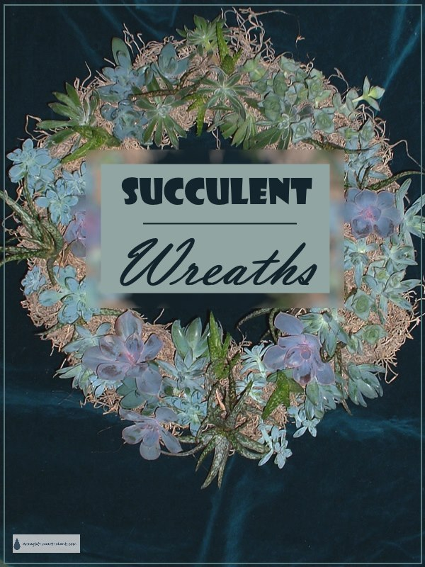 Succulent Wreaths - gorgeous accents
