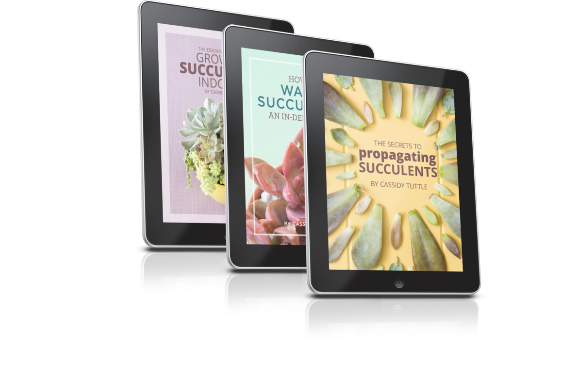 Succulents and Sunshine E-Books - all about our favorite topics...