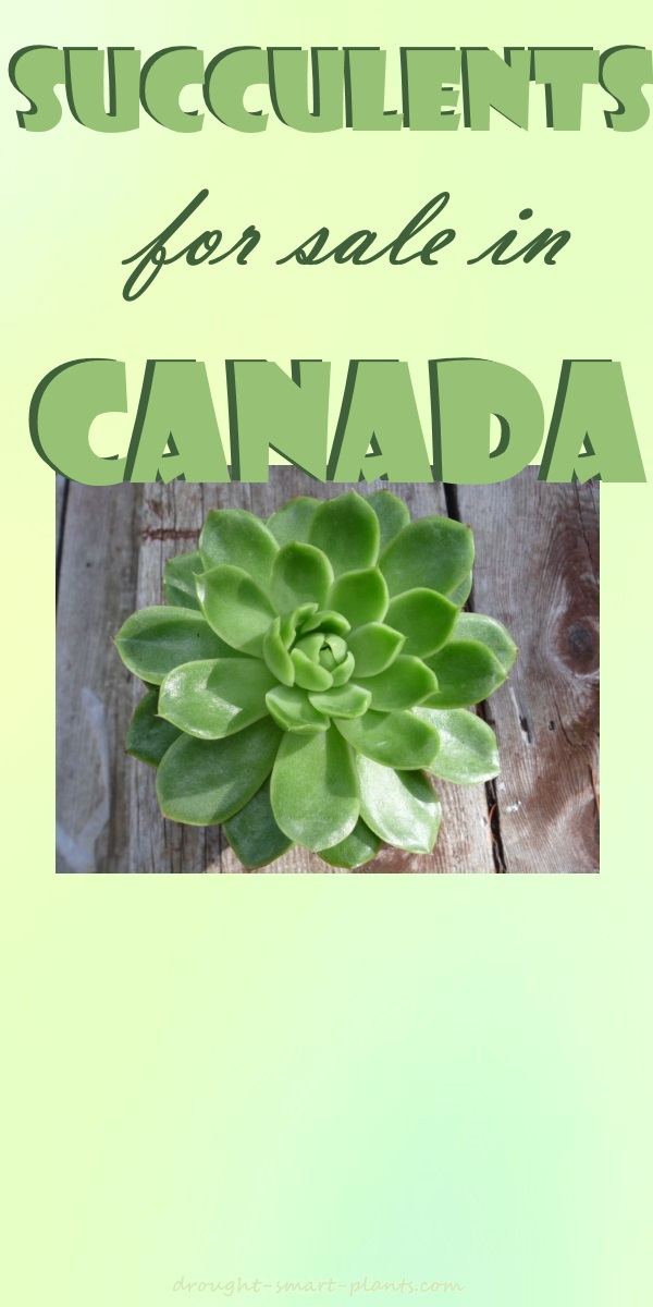 Succulents For Sale in Canada...