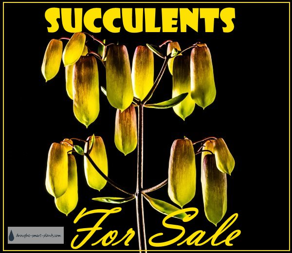 Succulents For Sale...