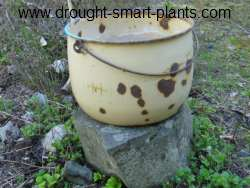 Succulents in Enamel Ware Pots like this rusty and rustic one will be fabulous