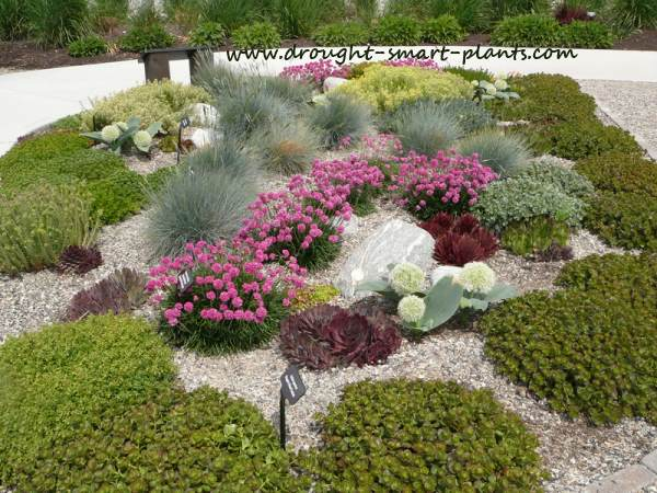 See more examples of gorgeous xeriscaped gardens...