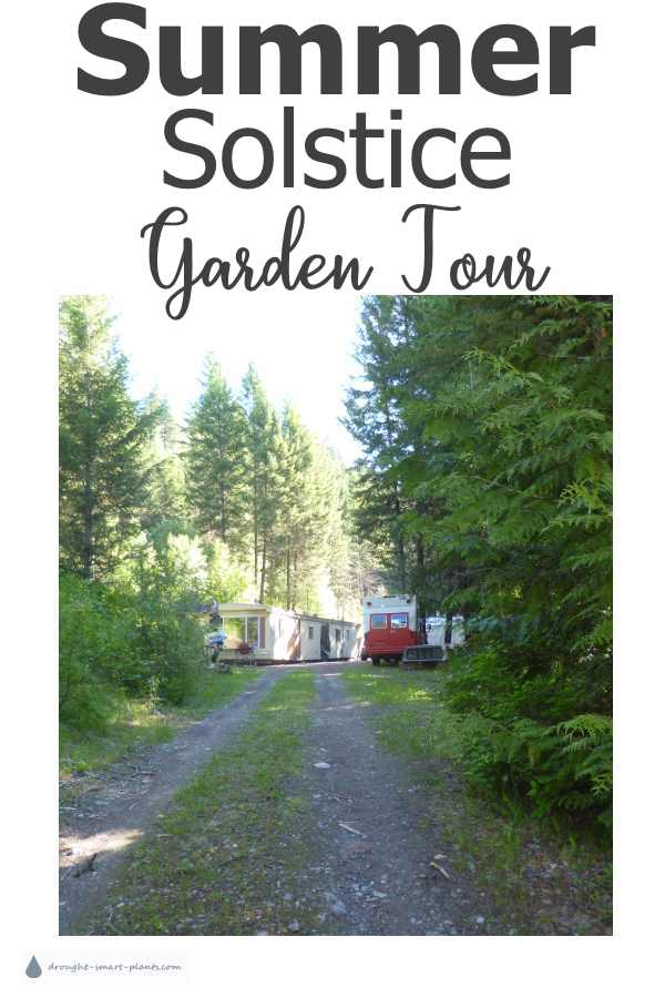 Summer Solstice Garden Tour - what's happening in the garden in June