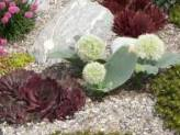 Your HOA and Xeriscaping