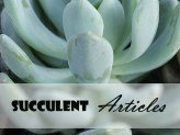 Succulent Articles