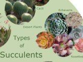 Types of Succulents...