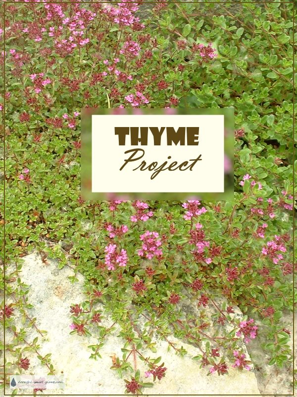 Thyme Project - what's your plan?