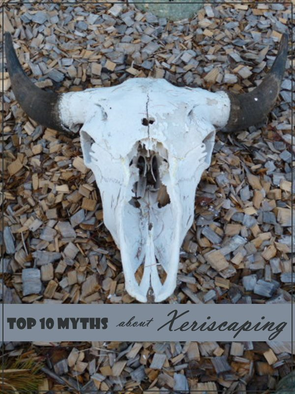 Top Ten Myths about Xeriscaping