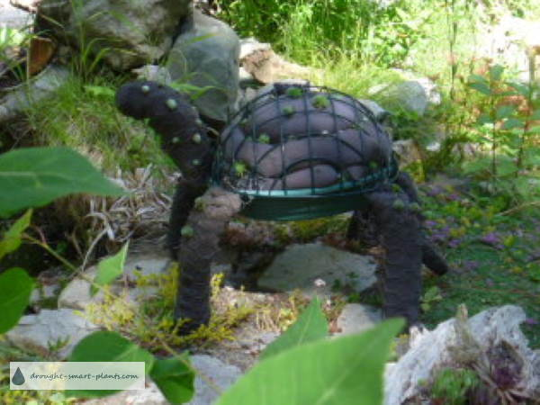 Closer view of the Topiary Turtle