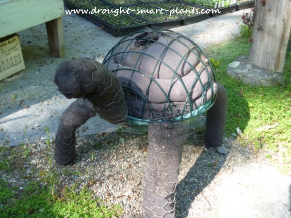topiary turtle, completed, front view