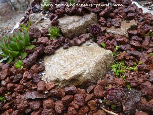 Planted and mulched with lava rock