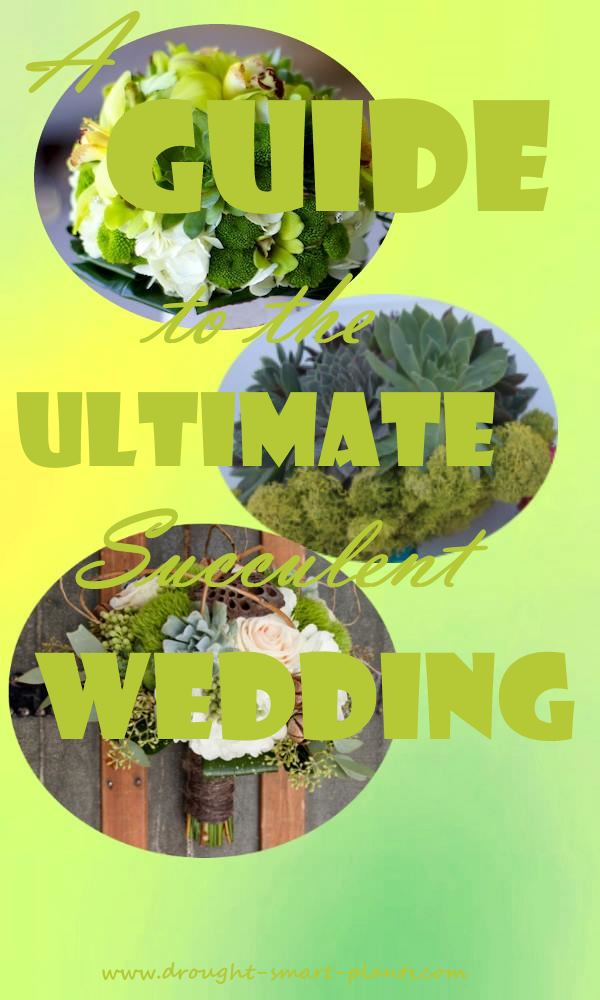 A Guide to the Ultimate Succulent Wedding - Make Yours Stand Out From the Crowd...