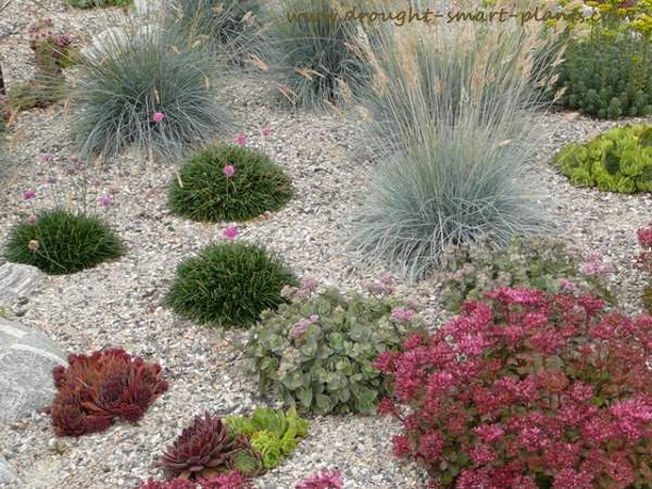 Thickly mulched with gravel, there are no weeds here!