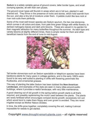 What's Inside Xeriscaping with Succulents?  Buy the book for more...