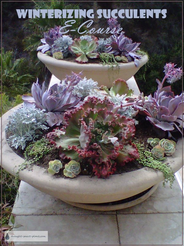 Overwinter your gorgeous succulents