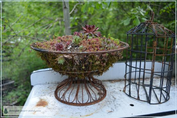 Wire Fruit Basket Planter in May 2016