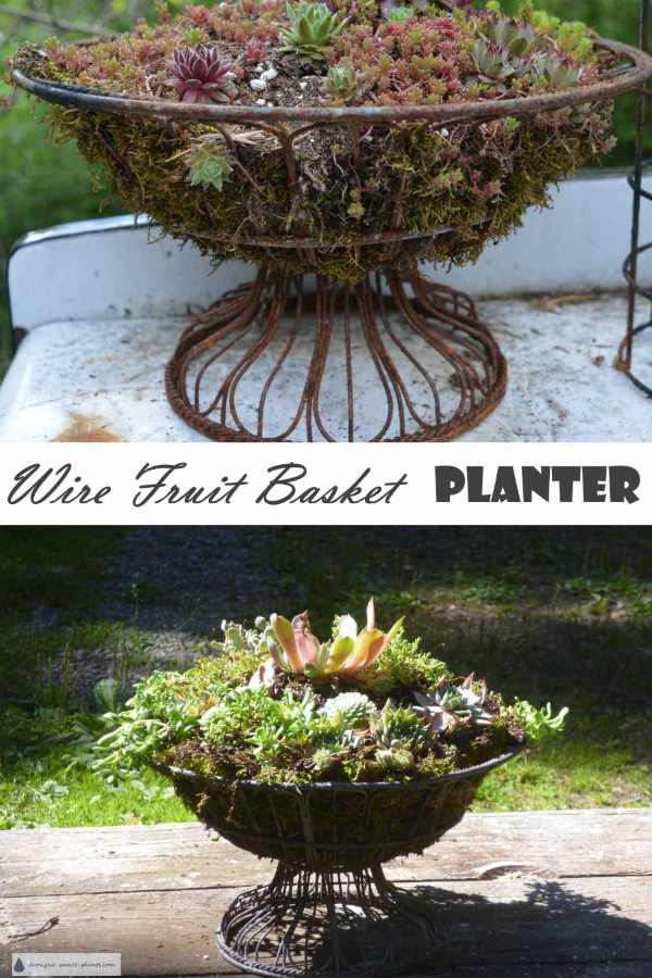 Wire Fruit Basket Planter
