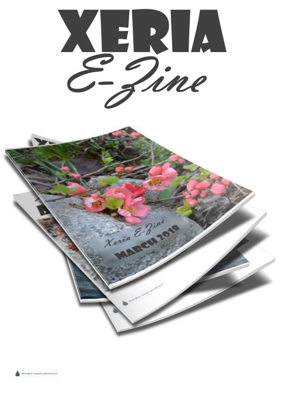 Sign up for the FREE monthly online newsletter all about succulents and the gardens and planters to put them in - Xeria E-Zine - the best way to stay in touch...