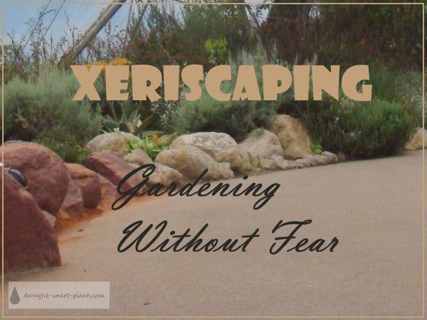 Xeriscaping: Gardening without Fear